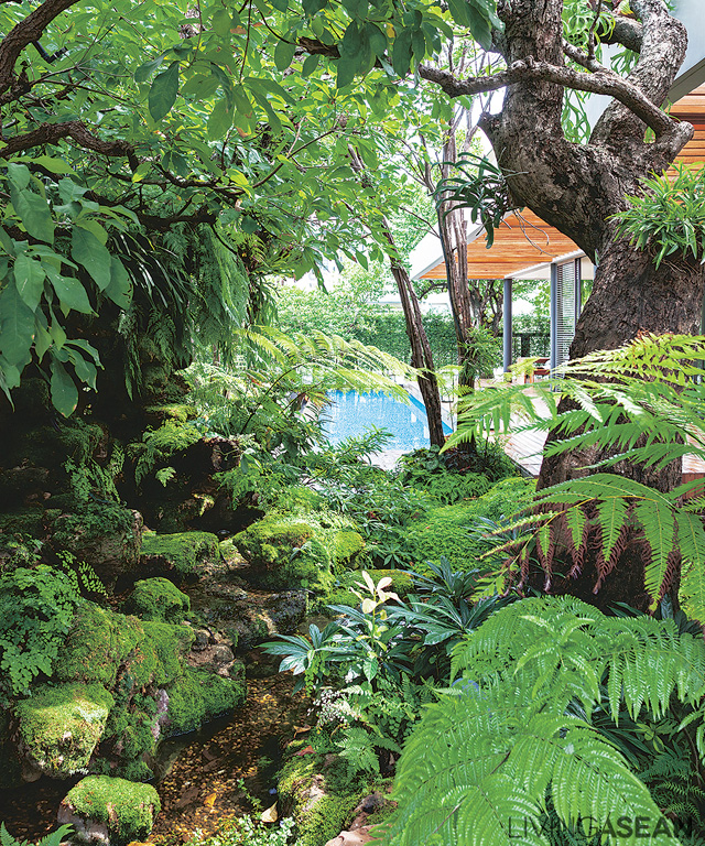 A spot in the garden where plants grow as naturally as they would in the forest. The natural effect is enhanced by setting plants at different heights, from ground cover through low shrubs, on up to tall vegetation.