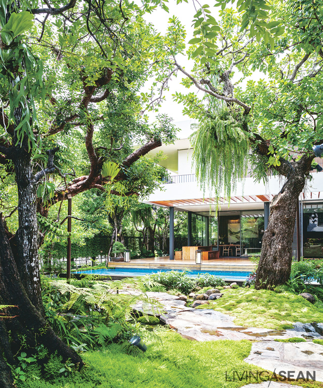 Trees and shrubs shade the semi-enclosed pathway connecting the two houses with the swimming pool, giving the sense of walking through a sparse jungle.