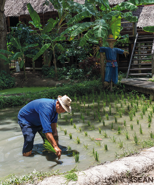 The Thai Way of Life Zone isn't about just farming demonstrations. It offers hands-on experience in every step of rice cultivation. Guests can try their hand at doing it, from sowing seeds and replanting to harvesting and milling.