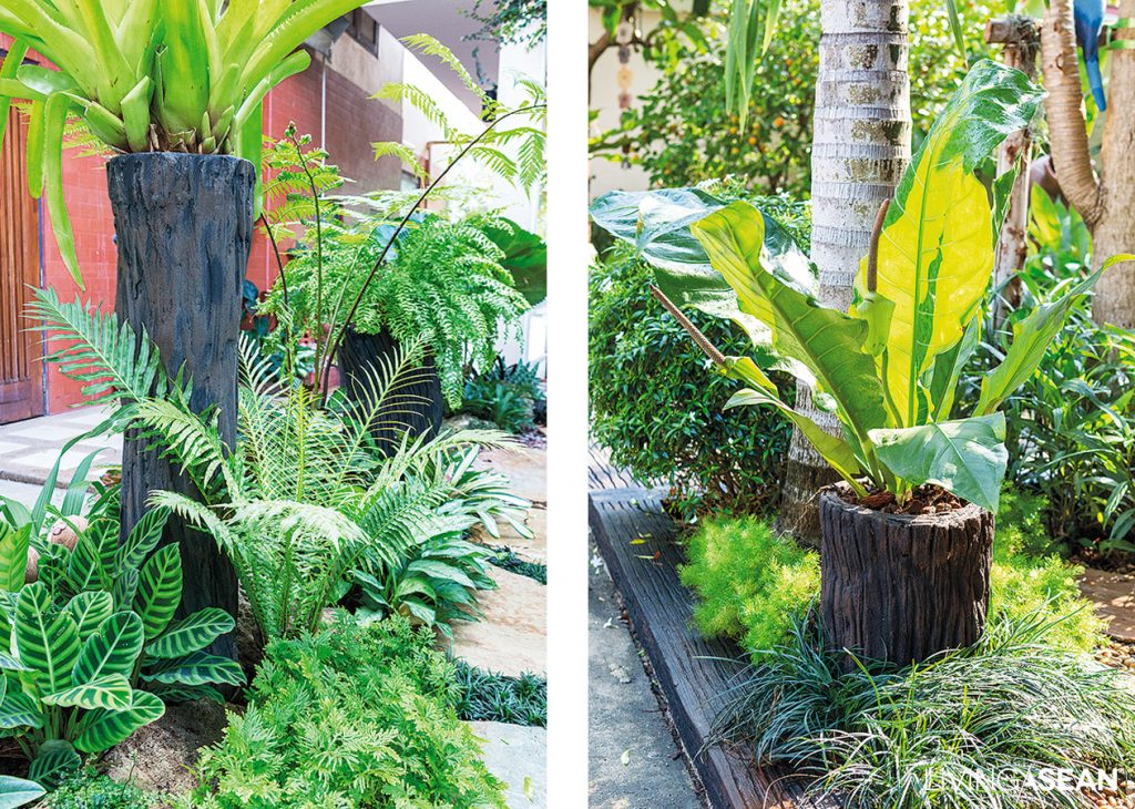 Tropical garden for extended family living asean for Low maintenance tropical plants