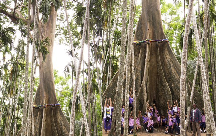 10 Remarkable and Beautiful Big Trees in Thailand