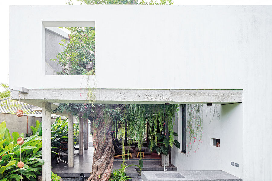 Compact Tropical House