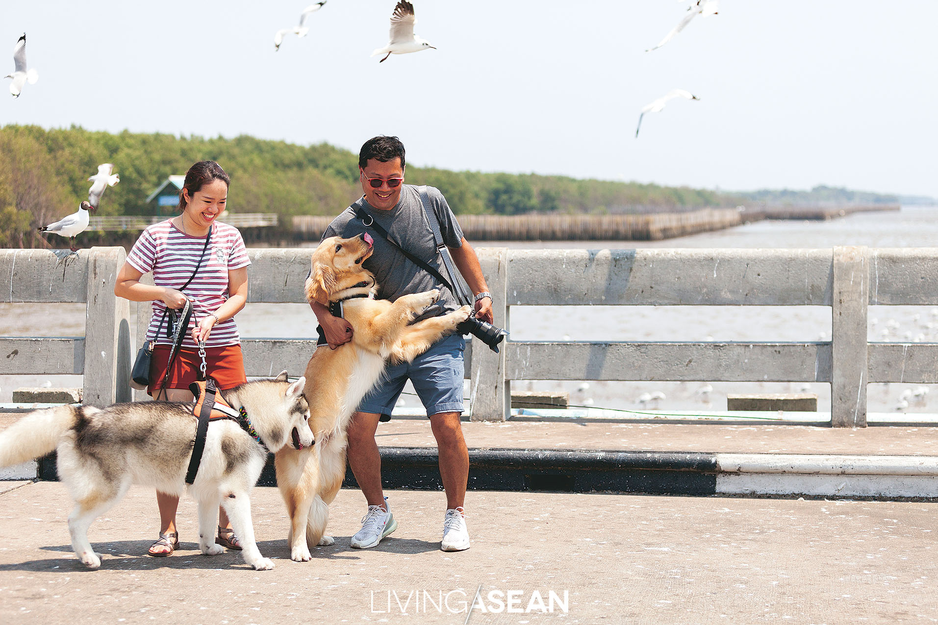 Even dogs need a vacation. Jobby, Whan and their four-legged friends are on a bird watching trip to Bang Pu, Samut Prakarn, which is only a short drive from where they live.