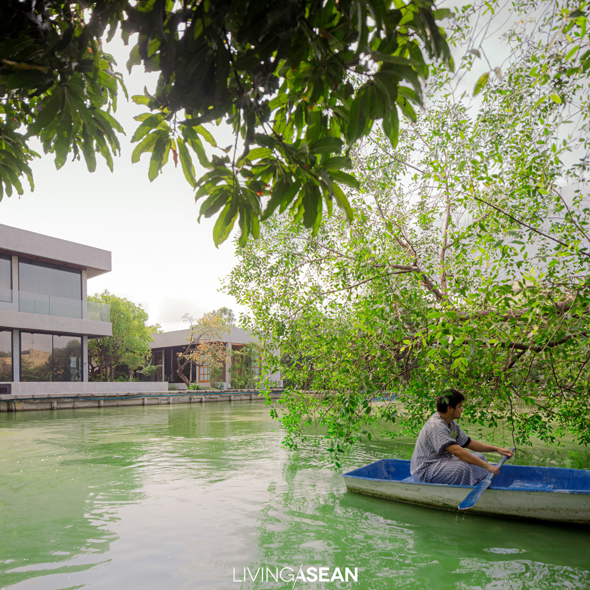 The homeowner rows his dinghy past drooping branches of a Lampoo or cork tree (Sonneratia caseolaris L. Engl.). The lake is home to many carp that he has raised since they were young. He sometimes catches snakehead fish for food.