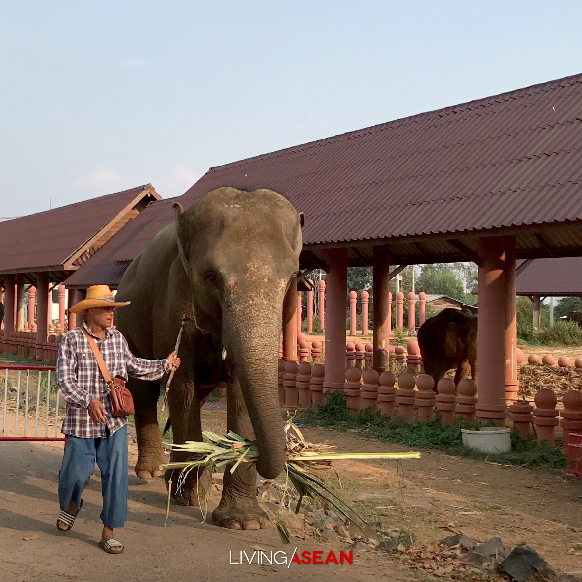 The Elephant World of Surin