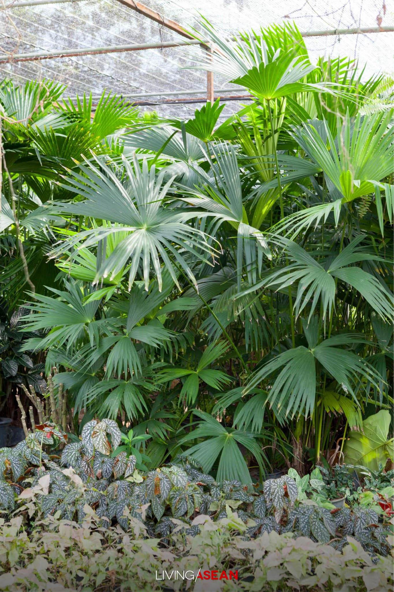 Bensley Design Studios, Botanica Garden, Beautiful Garden, Chiang Mai, Thailand